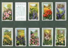 Cigarette card  Wild Flowers 1939 set of 48 complete